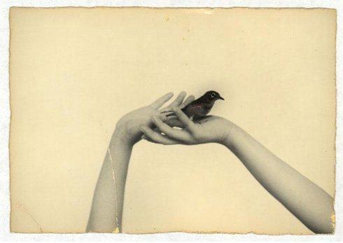 دست هات، و پرنده ای که من بودم...