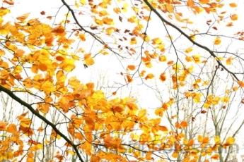 پاییز آمده انگار...