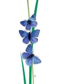 گُلْ پروانه ها... اثر بهنام زنگی...